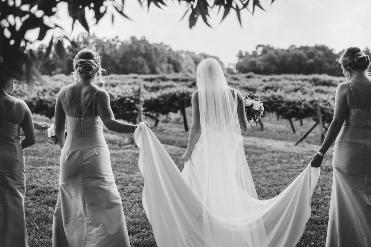 Bride and her bridesmaids walking to the wedding ceremony in a vineyard.