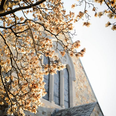 An exterior shot of the underside of a branch of cherry blossoms that surround the peak of the roof of the church that will soon host the wedding.
