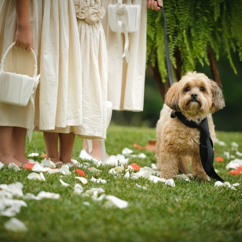 A dog near and dear to the bride and grooms heart joins in during the wedding ceremony, complete with his own personal tie.