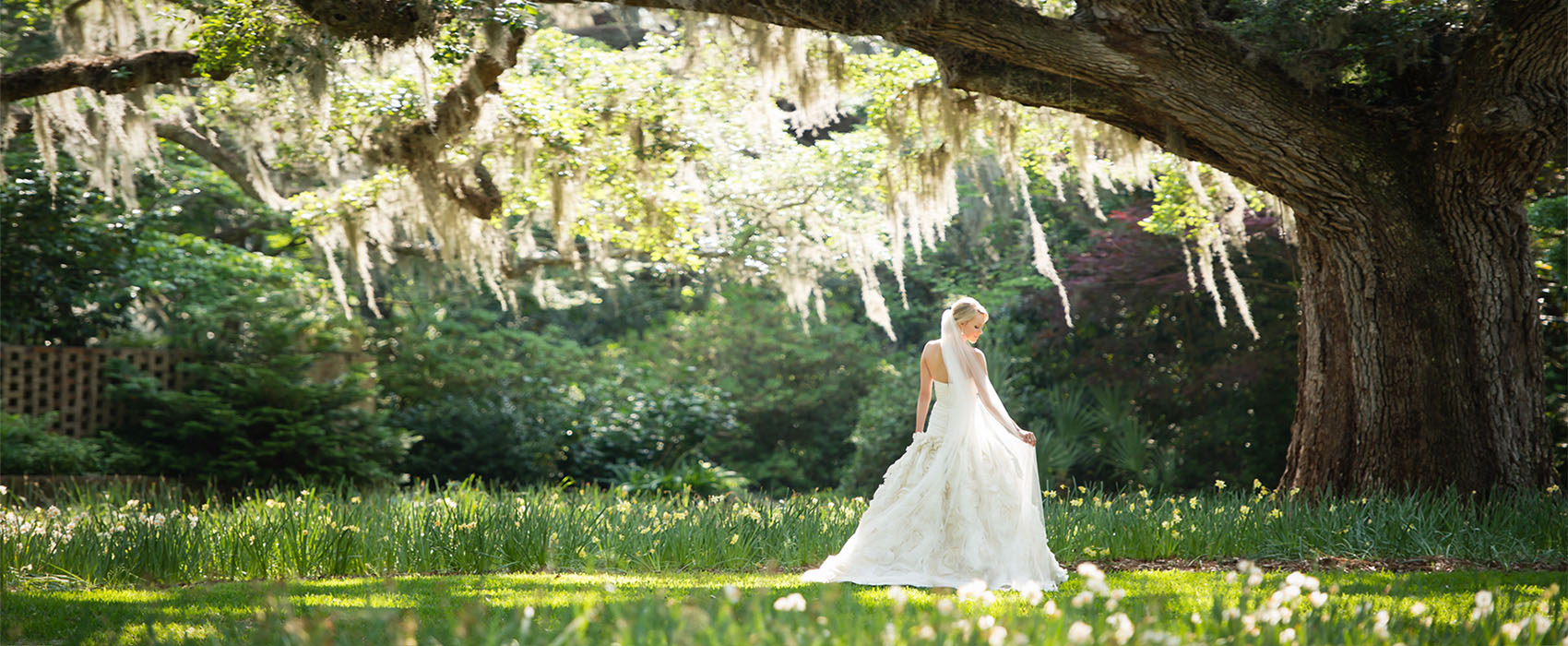 The sun shines through the oak trees draped with Spanish moss onto the bride who is standing in a field of daffodils.