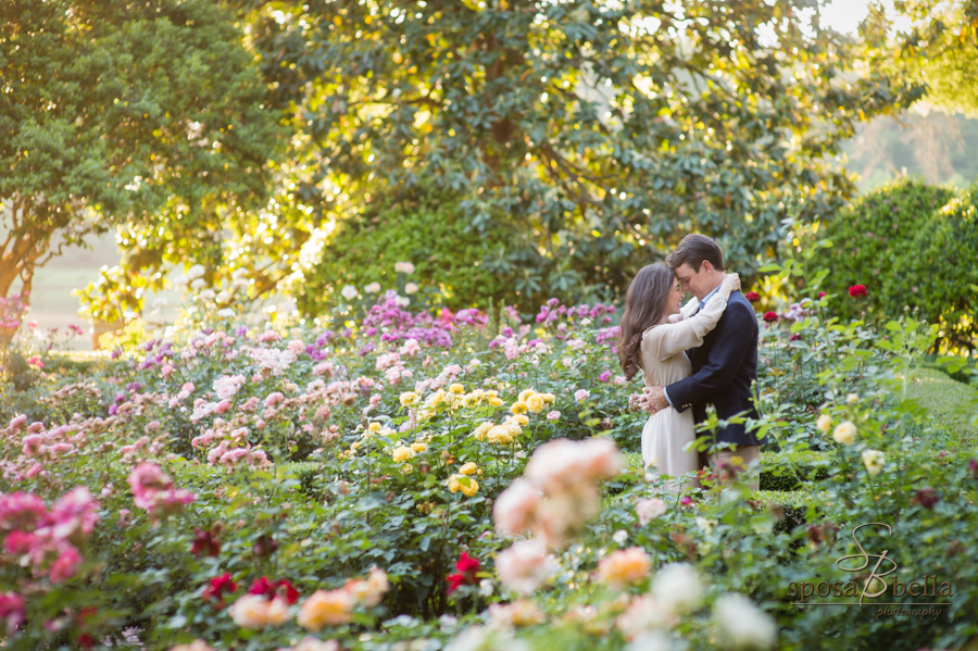 Engaged couple embraces among the flowers at the Furman Rose Garden.