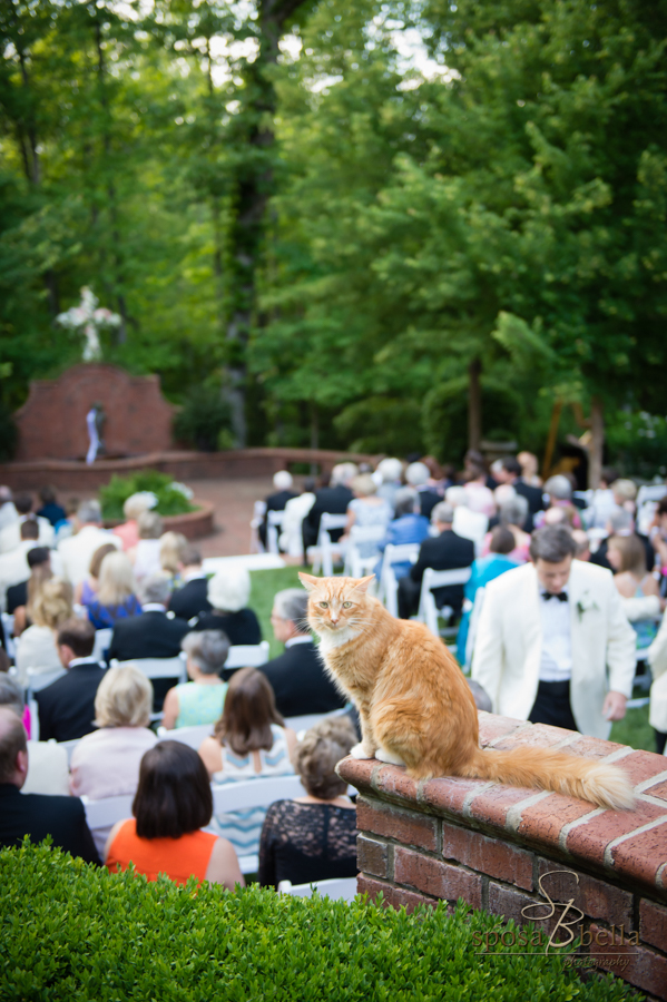 The family pet cat overlooks the ceremony.