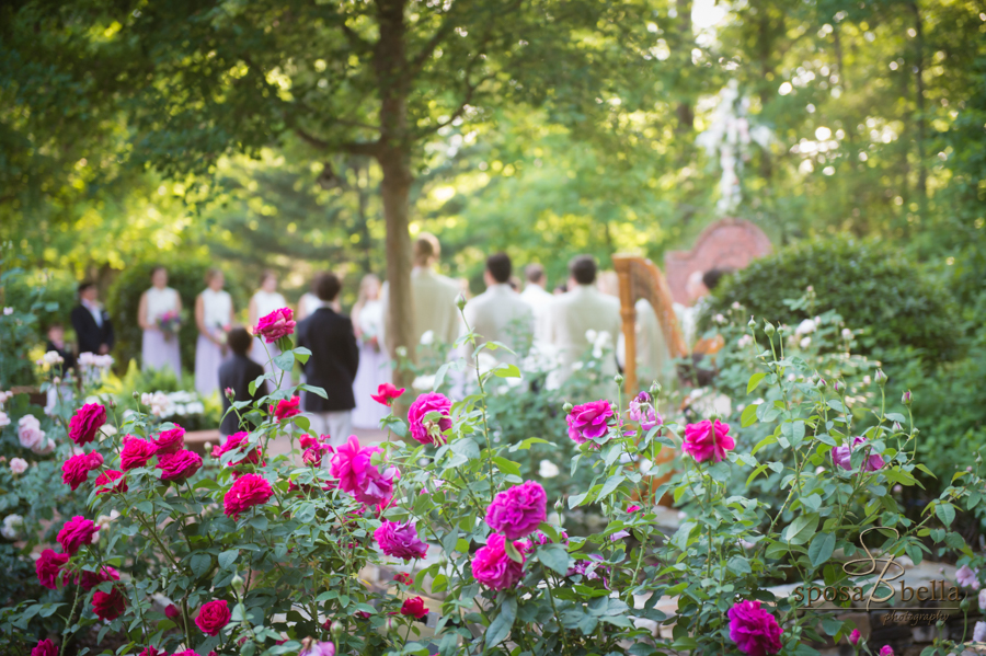 These massive rosebushes and the ornate harp in the foreground of a shot overlooking the guests as the bride proceeds down the aisle.